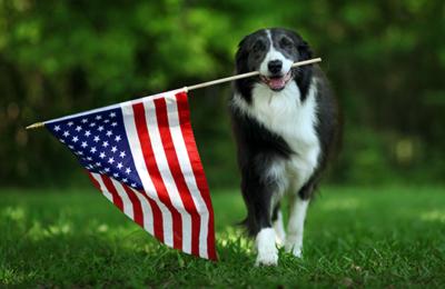 Patriotic Pup Snack