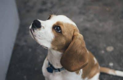 Dog Socialization Do's and Don'ts