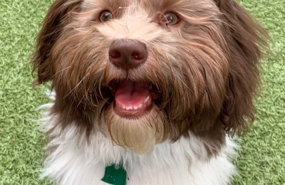 Congratulations, Henry, Our March Dog of the Month!