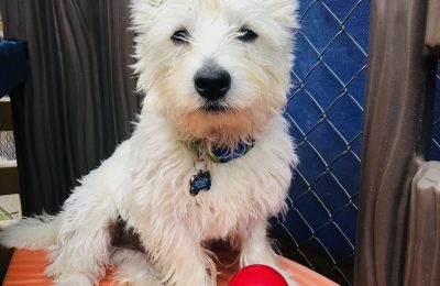 Congratulations, Miko, Our June Dog of the Month!