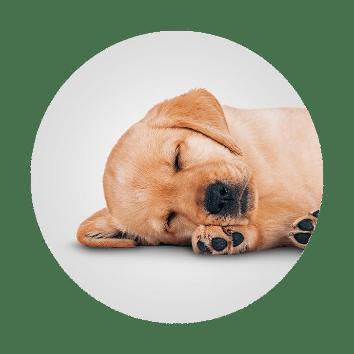 Sleepovers - Off