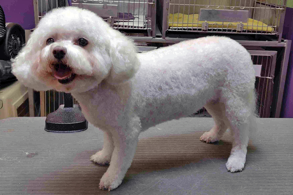 Central Bark Broadview Heights Dog Grooming After