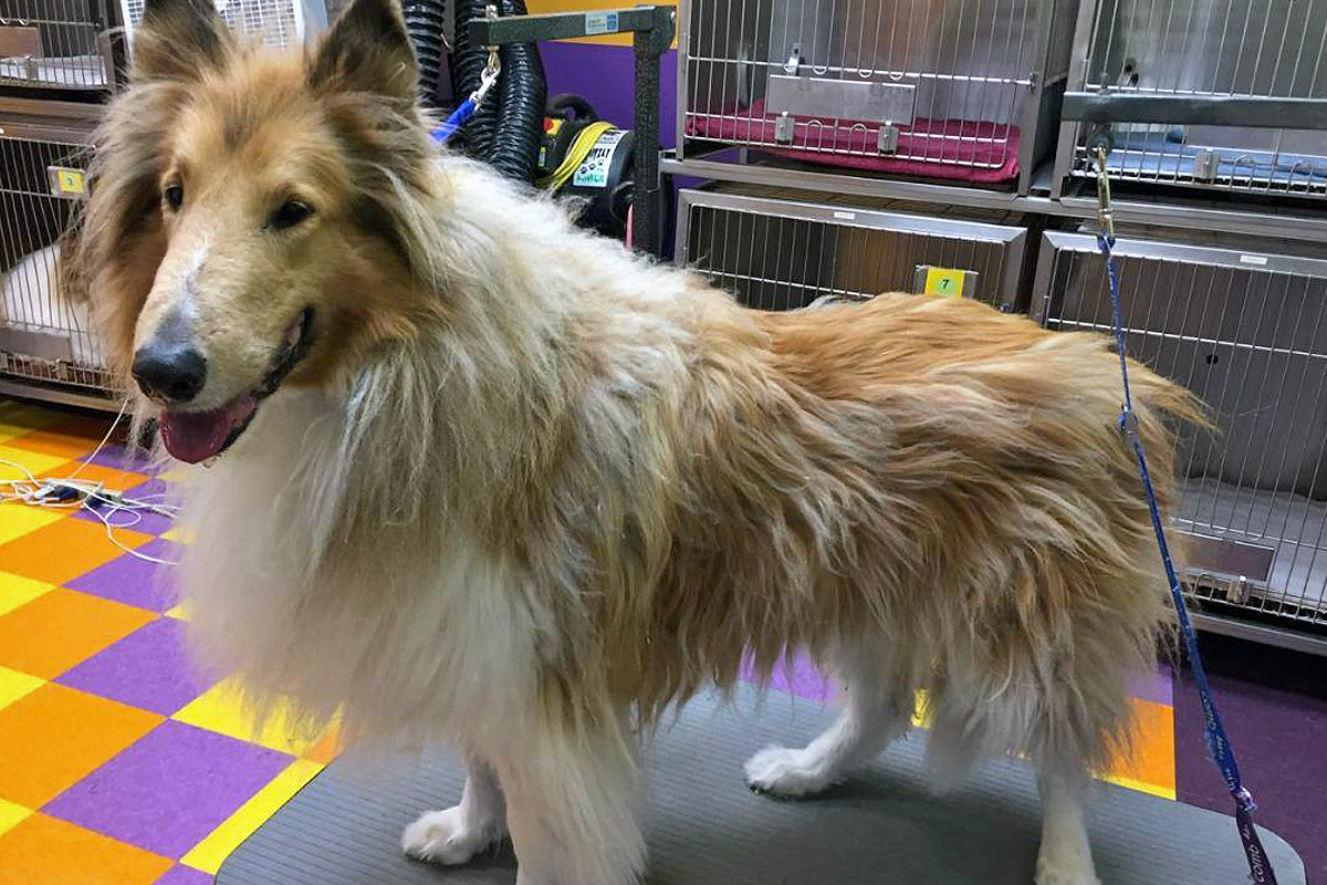 Central Bark Broadview Heights Dog Grooming Before