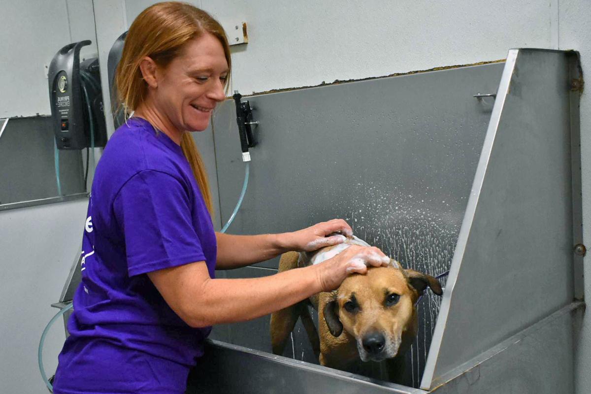 Central Bark Broadview Heights Dog Baths