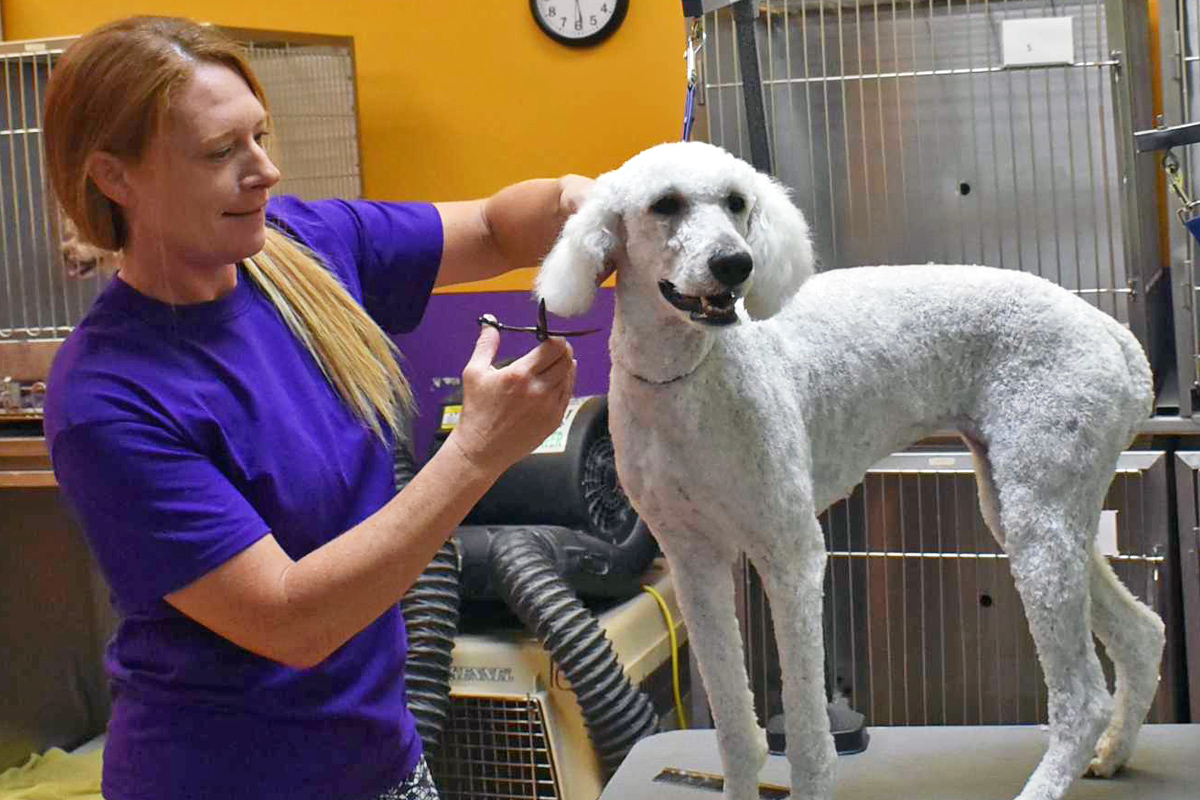Central Bark Broadview Heights Dog Grooming