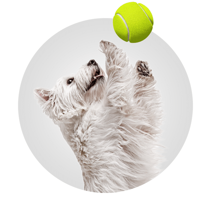 Doggy Day Care Franchise  Opportunity