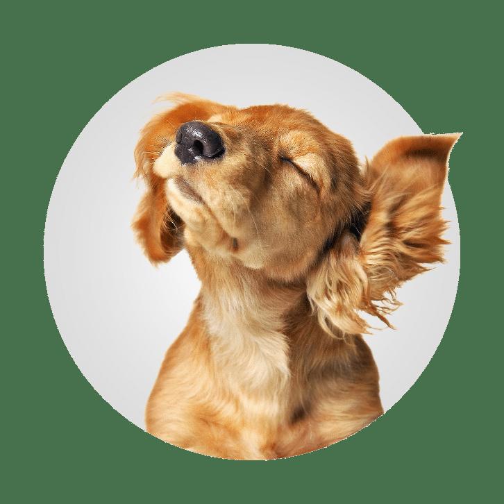 Doggy Salon and Spa