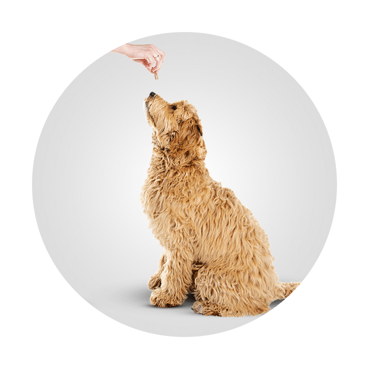 Central Bark Doggy Daycare Franchise Opportunity