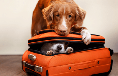 Traveling Without Your Dog