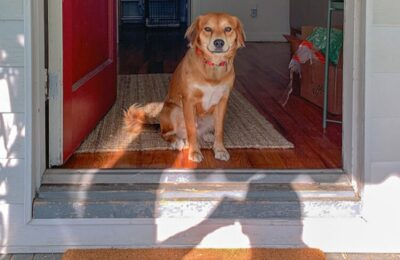 Setting Your Dog Up for Separation and Confinement Success