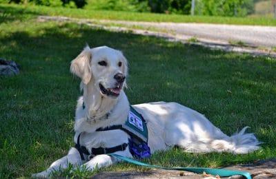 National Service Dog Month