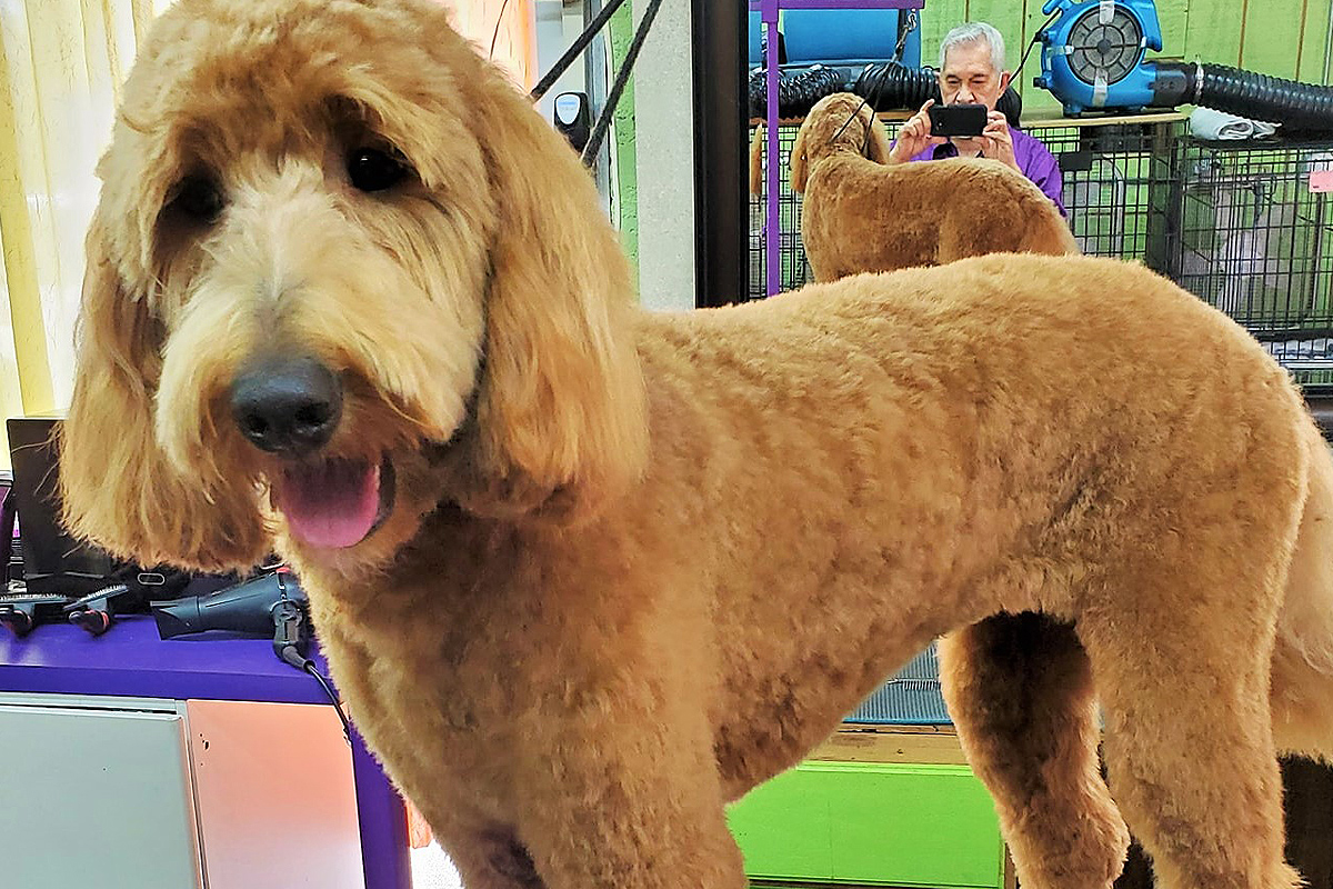 Central Bark Fort Lauderdale Dog Grooming