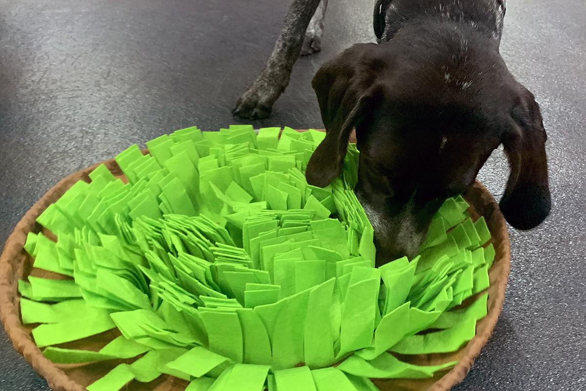 Central Bark Fort Lauderdale Dog Training & Enrichment