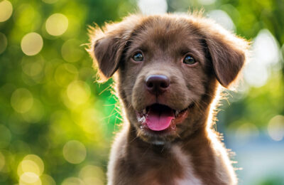 Six Keys to Successful Puppy Housetraining