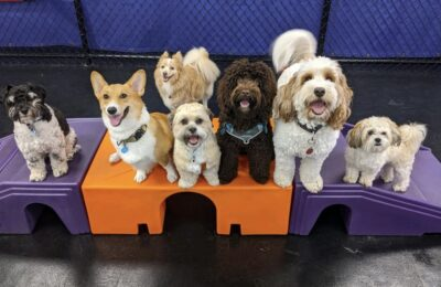 5 Best Doggy Day Care Center in Jacksonville 🥇
