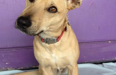Congrats Remington! April Dog of the Month!