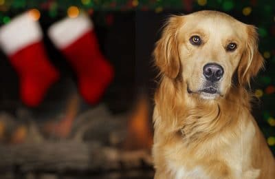 DIY Stocking Stuffers for Your Dog!