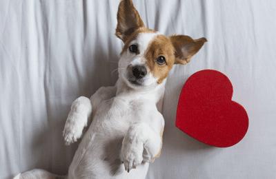 My Dog is my Valentine: 7 Ways to Celebrate Valentine's Day with Your Dog