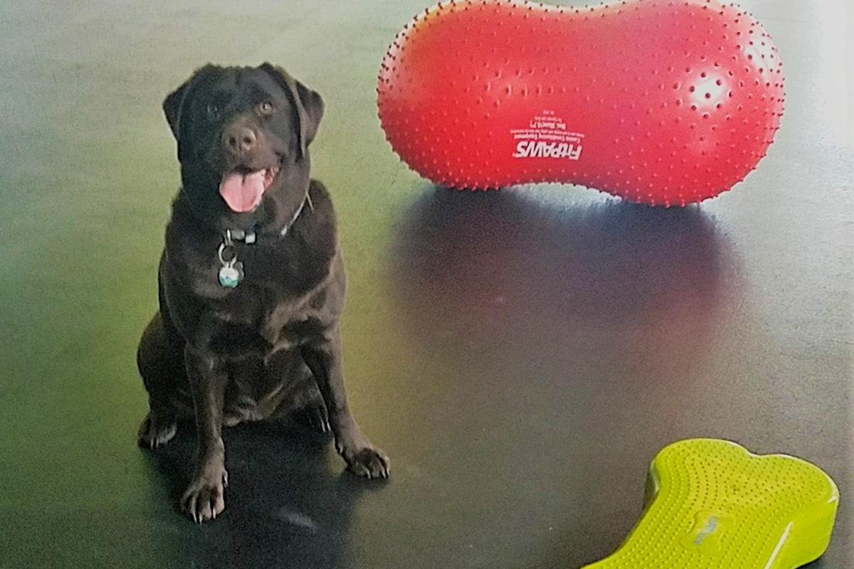 Central Bark New Berlin Dog training & Enrichment