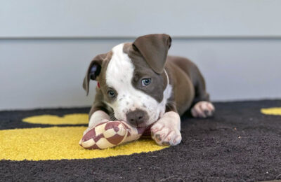 Puppy Enrichment Tips and More