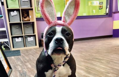 Easter Fun For Your Dog