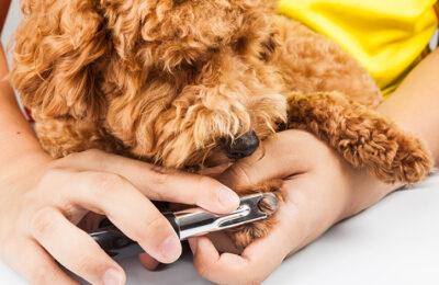 Easier Dog Nail Trims