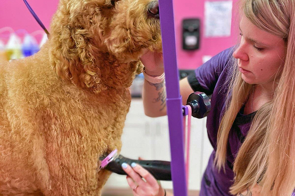 Central Bark Rochester Dog Grooming