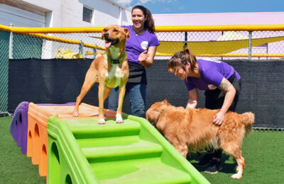 What is Dog Day Care?