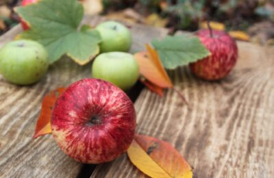 Apples – A Great Valentine's Day Treat For Your Dog