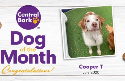 July 2020 Dog of the Month