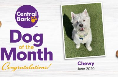 June 2020 Dog of the Month