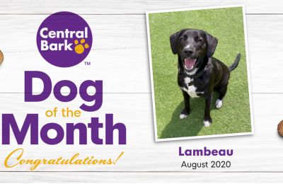 August 2020 Dog of the Month