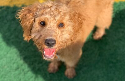 Congratulations, Milo, Our September Dog of the Month!