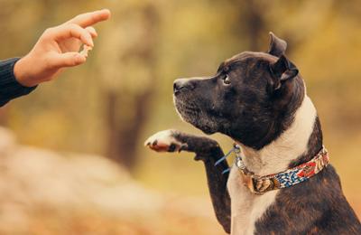 Dog Tricks for Stress Relief