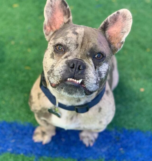 Congratulations, Louie, Our July Dog of the Month!