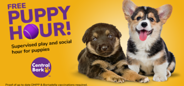 Free Puppy Hour at Central Bark West Columbia