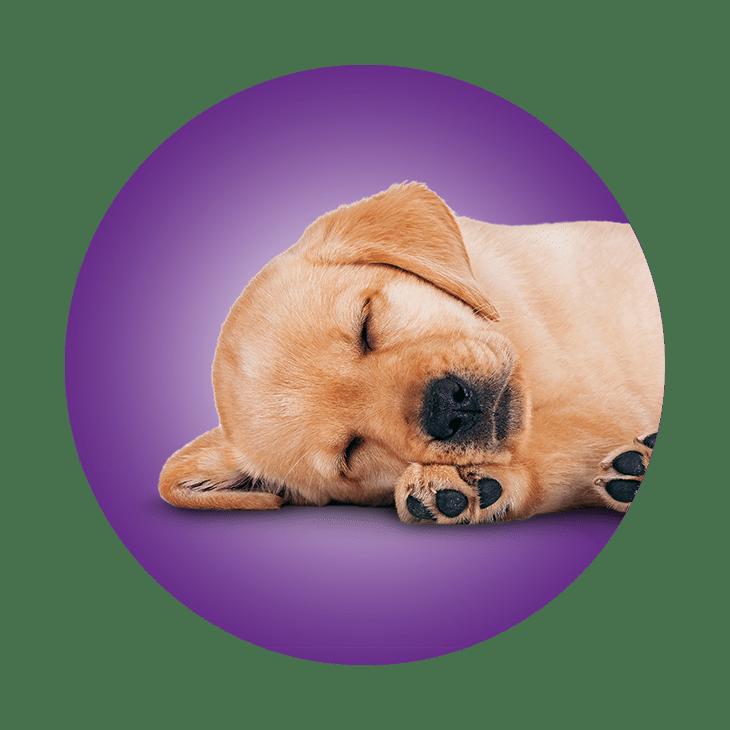 Sleepovers - On