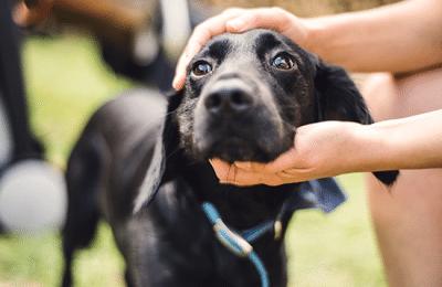 Dog Adoption Tips